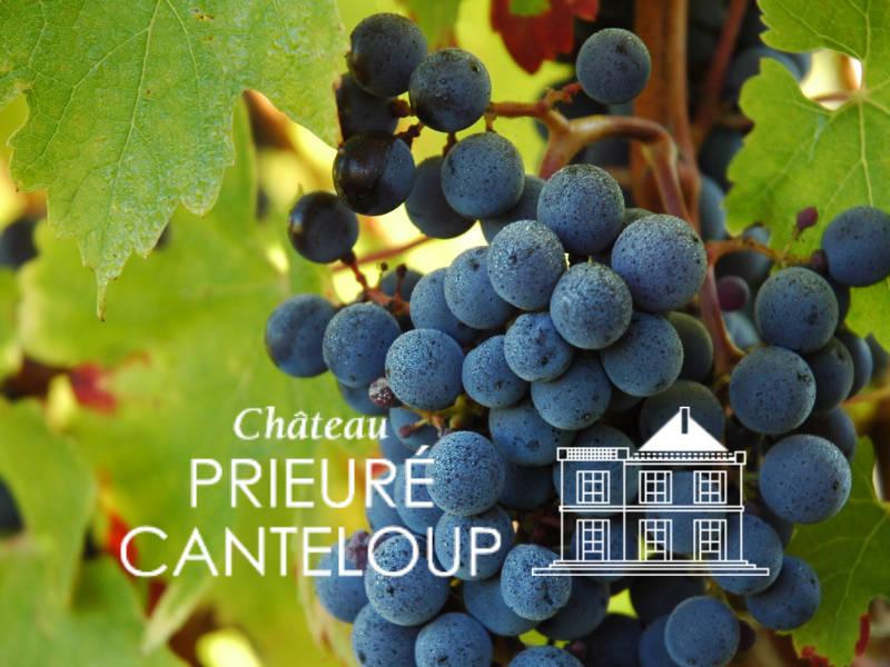 <h3>Château Prieuré Canteloup </h3></br>Boutique en ligne