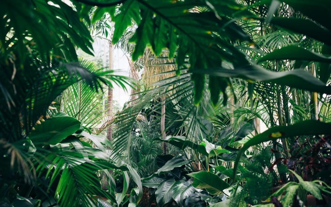 I benefici della natura nell'ambiente di lavoro
