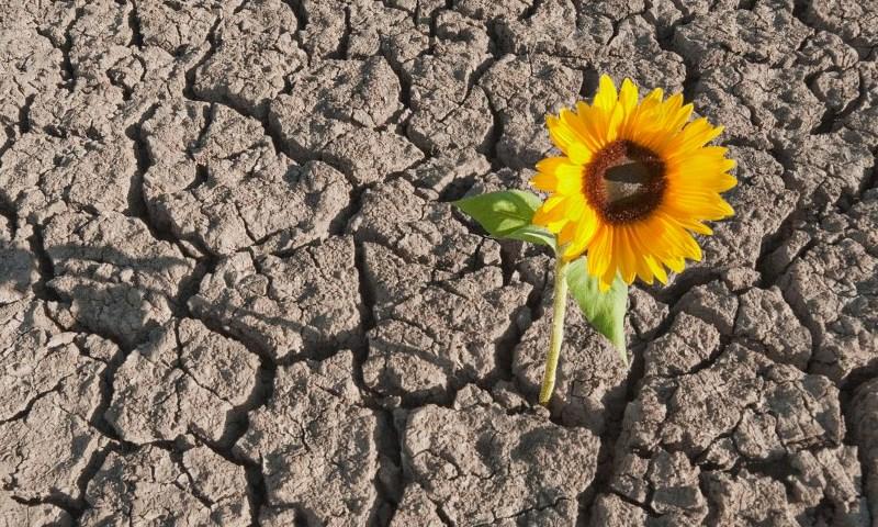 Resilienza: innata o appresa?