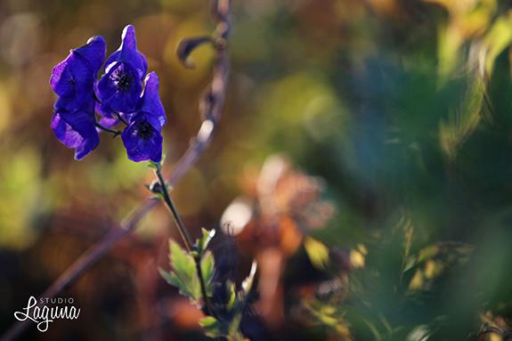 gatherflower