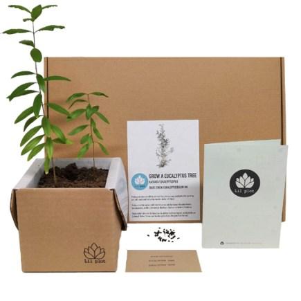 Lil Plot Granatapfelbaum Anzuchtset