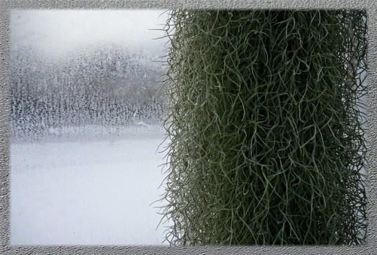 Simple Winter Window in Lamberton Conservatory