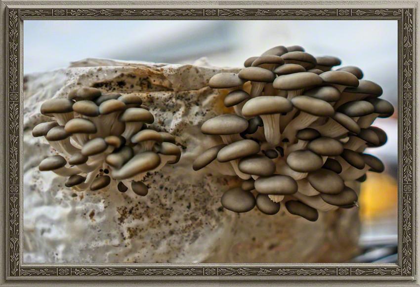 Oyster Cliffs