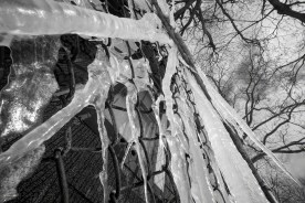 Composition in Black and White and Ice