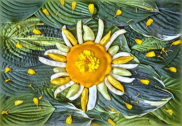 """Here comes the sun - as a Yellow Patty-Pan Squash, Hot pepper """"Dancing Spirits"""", Ecuadorian """"Hot Lemon"""" Pepper and Wax Romano Pole Beans. Lots of Hostas (luv em) and the stellar core (and rays) made from a marigold that planted itself in our garden. (Thank you Vincent, we still love you so.)"""