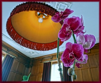 Phalaenopsis sp. with Early 20th Century Lampshade