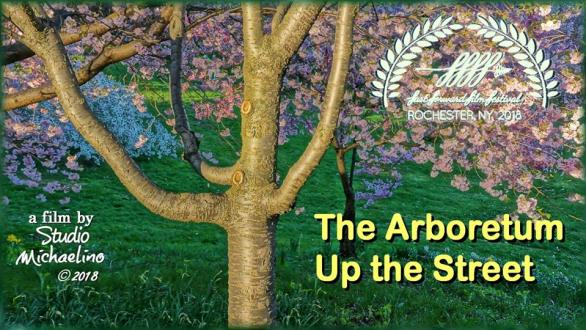The Arboretum Up the Street - A new film from Studio Michaelino