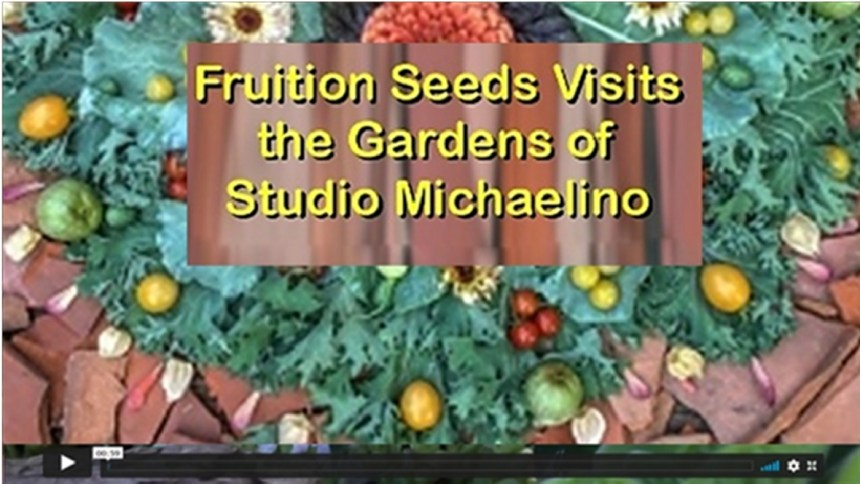 Fruition Seeds Visits the Gardens of Studio Michaelino (52 Min. ) A virtual visit to the backyard gardens and open-air studio of Studio Michaelino's Marcia and Michael. Recorded live on August 21, 2020. The hour is hosted by our friend Petra Page-Mann of Fruition Seeds. We were honored to be part of Fruition's 2020 Garden Celebration and Consultation Series.