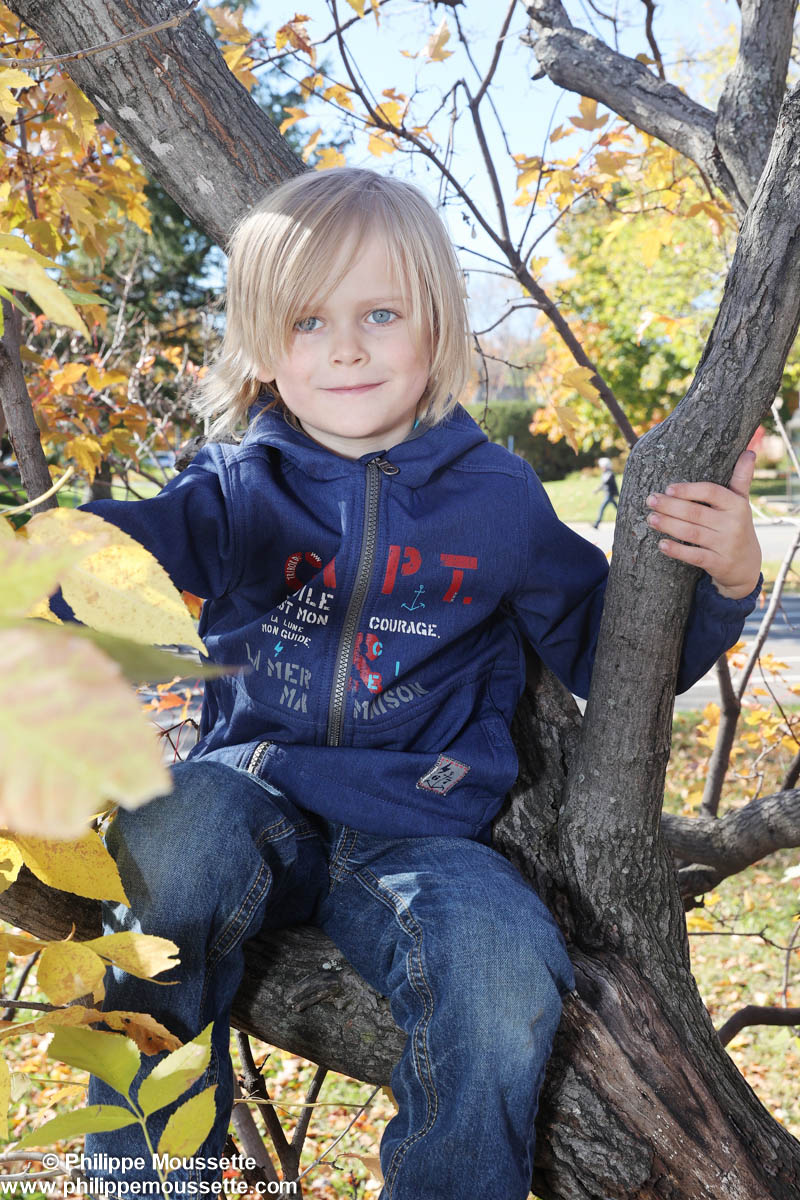 Garçon assis dans un arbre