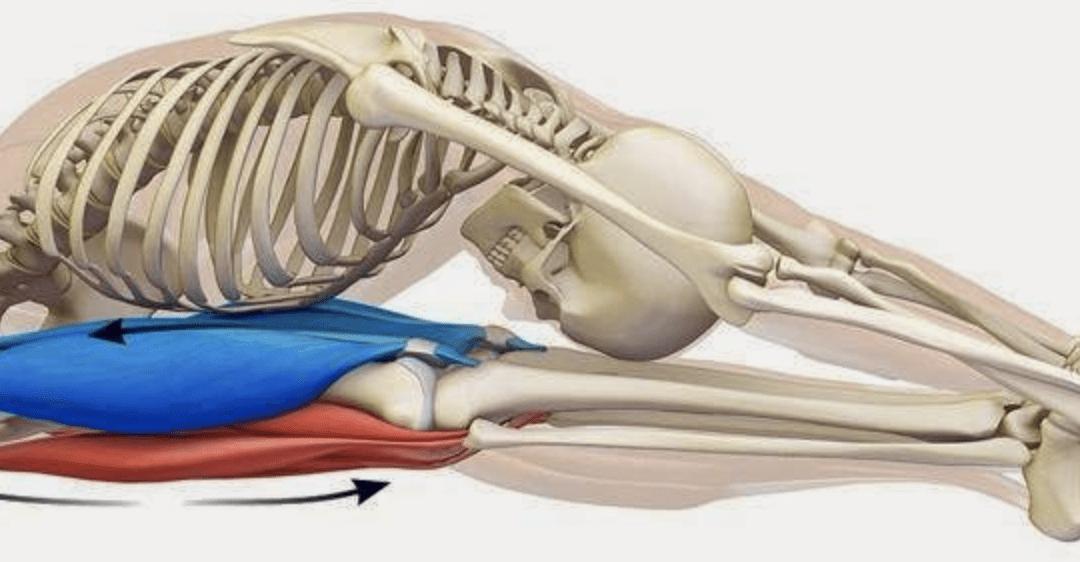 La temperatura della pelle cambia durante un esercizio di stretching statico muscolare.