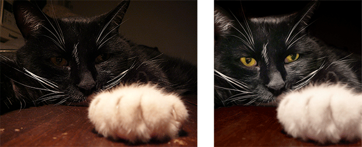 Comparison of original and optimized image of black cat with gold eyes staring at his paw.