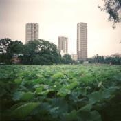 4 - TOKYO - Ueno Park