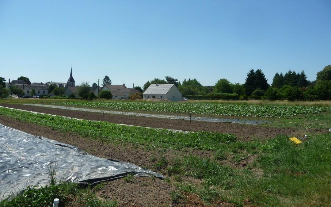Feuilles vives de l'école du paysage #9 – Une ferme maraîchère devenue périurbaine ? L'évolution rapide d'un paysage et d'une activité ancestrale