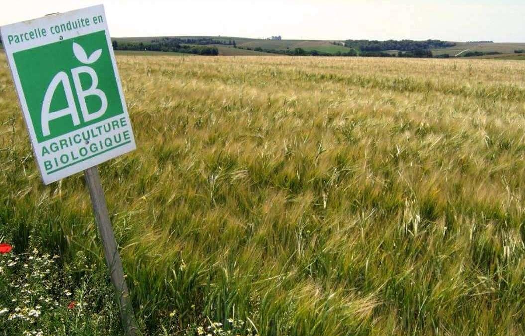La Chose Commune saison 2 – Dossier agriculture biologique 3 : l'industrialisation de la bio