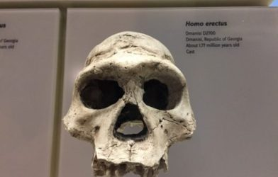 Humanlike cognition evolved 1.8 million years ago, a new study finds.