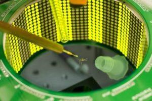 Mosquito in insect flight simulator