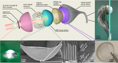 World's First 3D Artificial Eye