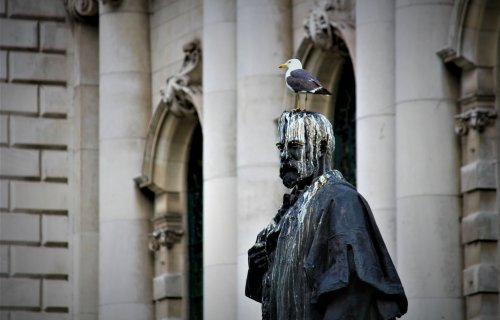 Statue covered in bird poop as seagull stand on its head
