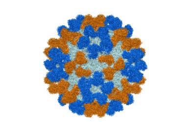 Antibodies for rare, polio-like disease in children