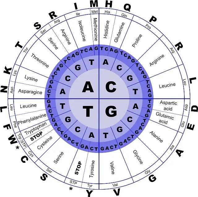 Mrna Codon Circle Chart