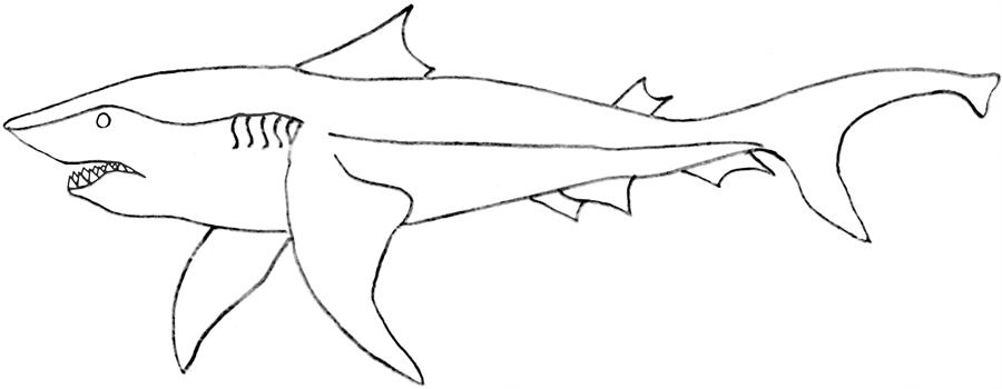 sperm shark colouring pages