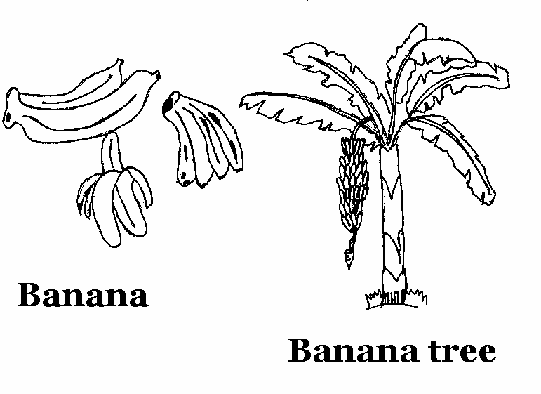 banana tree colouring pages