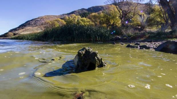 The green slime washes up on the shore.