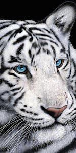 White Tiger Towel