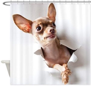 Chihuahua Break Through Shower Curtain