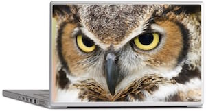 Great Horned Owl Laptop Decal
