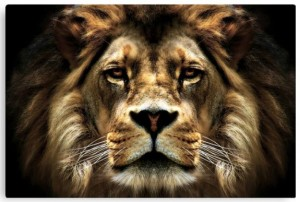 Lion Face Canvas Art Print