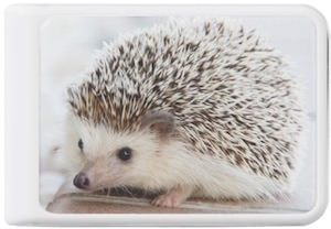 Baby Hedgehog Power Bank