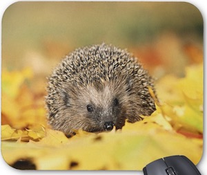 Hedgehog In Leaves Mousepad