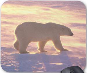 Polar Bear Sunny Day Mousepad