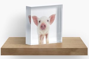 Piggy In Acrylic Block