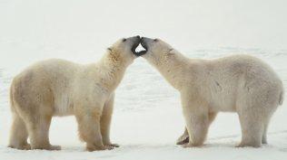 ice-king-polar-bear (10)