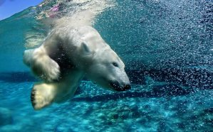 ice-king-polar-bear (13)