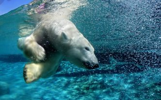 ice-king-polar-bear (13)