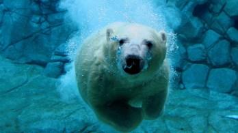 ice-king-polar-bear (17)