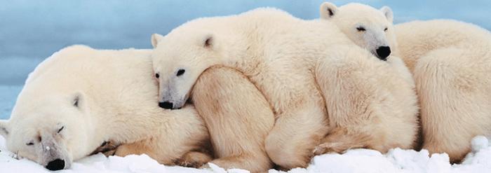 ice-king-polar-bear-mini