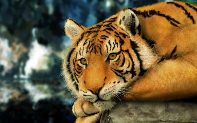 tiger-wallpapers-stugon.com (3)
