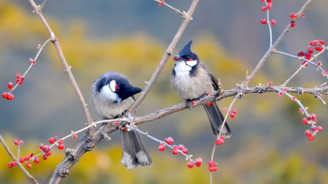 bird-wallpapers-stugon.com (1)