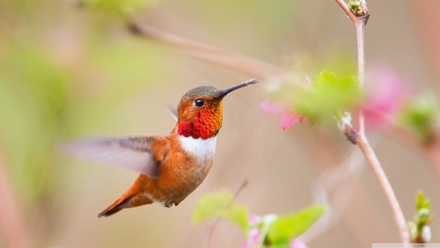 bird-wallpapers-stugon.com (10)