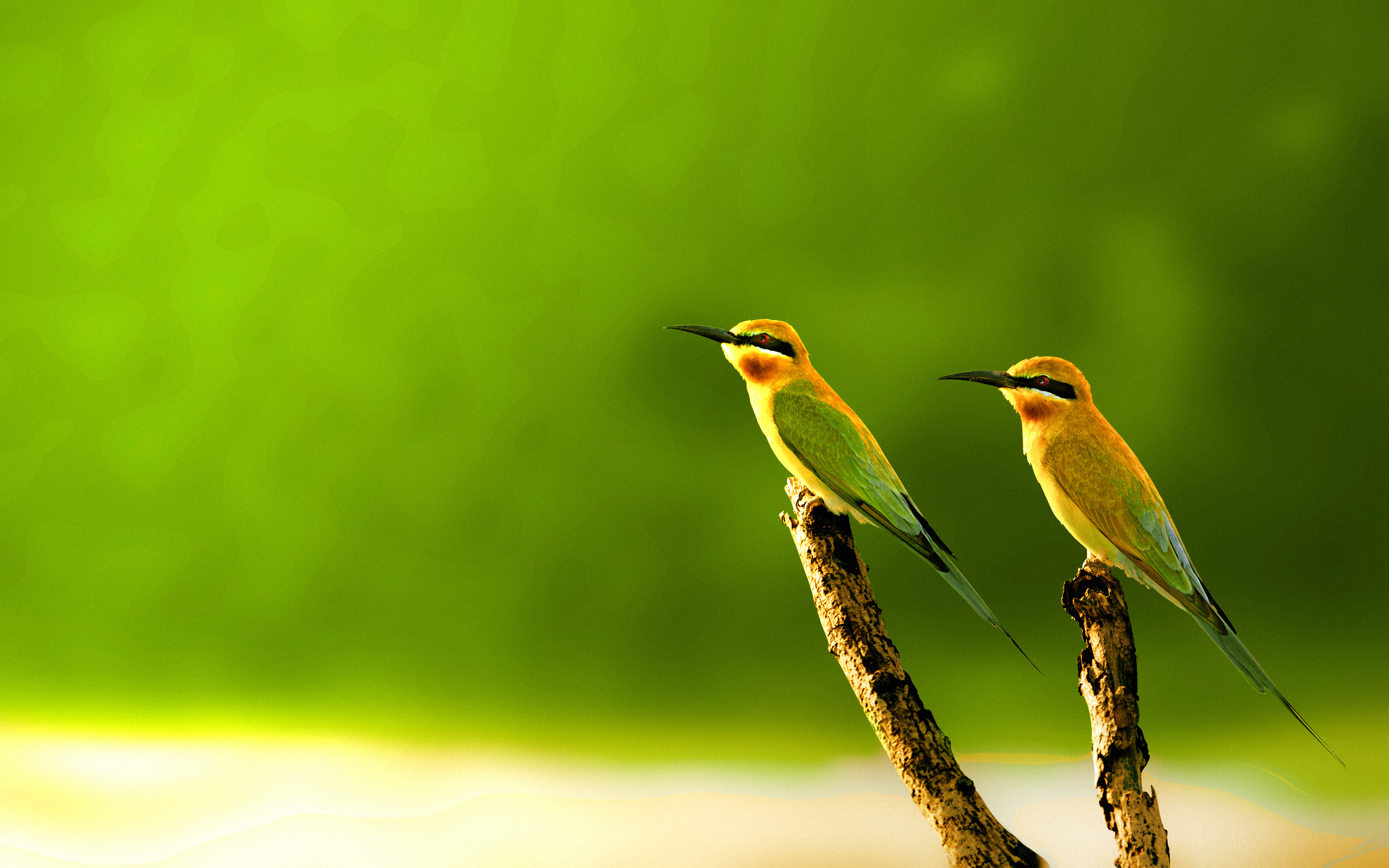 Love Birds Wallpaper Free Download For Pc: 15+ Beautiful Birds Wallpaper Collection [HD Edition]
