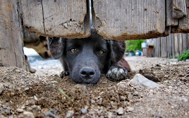 dog-wallpaper-collection-stugon.com (3)