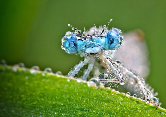 dragonflies-wallpapers-stugon (2)