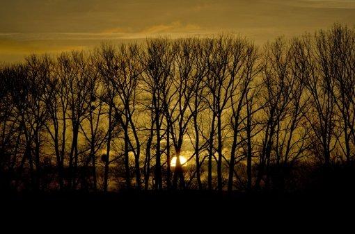 Die Natur ist ein Gut, das es zu erhalten gilt. Foto: dpa