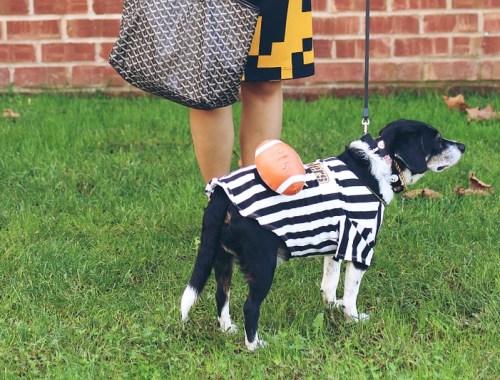 halloween dog costume, football referee dog