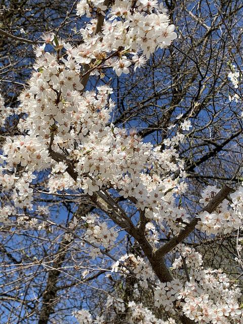 Kneipp-Frühjahr