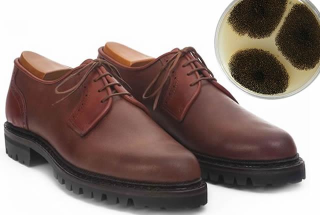 Biopolímeros para calzado con quitosano extraído de los hongos